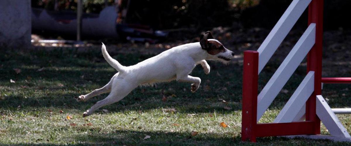 Assurances Martin - Espace Sports Canins